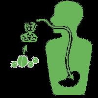 Bio Baumwolle & unsere Ernährung